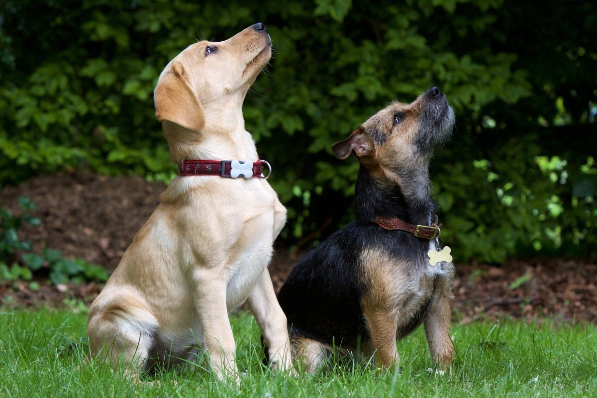 dogs-930727_1920